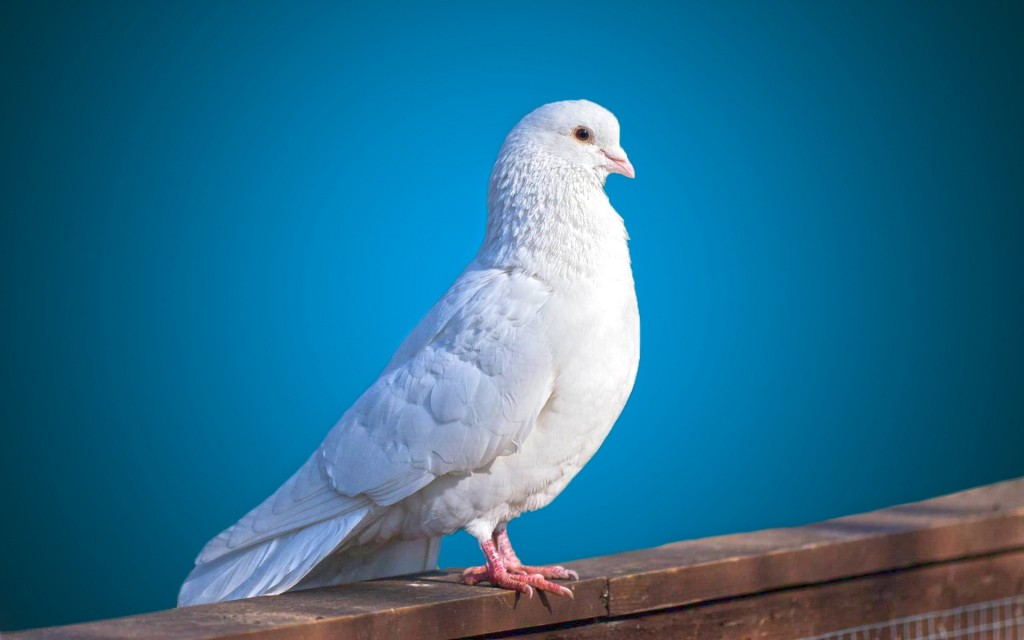 White Birds wallpapers HD