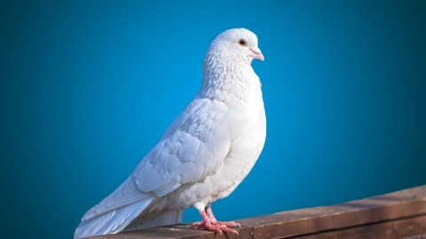 White Birds wallpapers high quality
