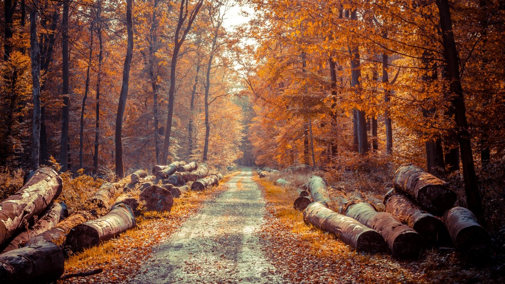 4k Autumn Wallpapers High Quality Download Free