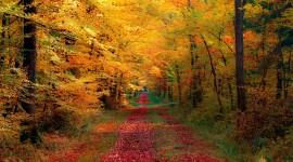 4K Autumn Photo#1