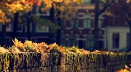 4K Autumn Wallpaper For IPhone
