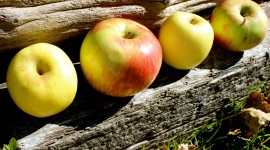 Autumn Apples Photo Download