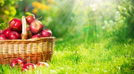 Autumn Apples Wallpaper Gallery