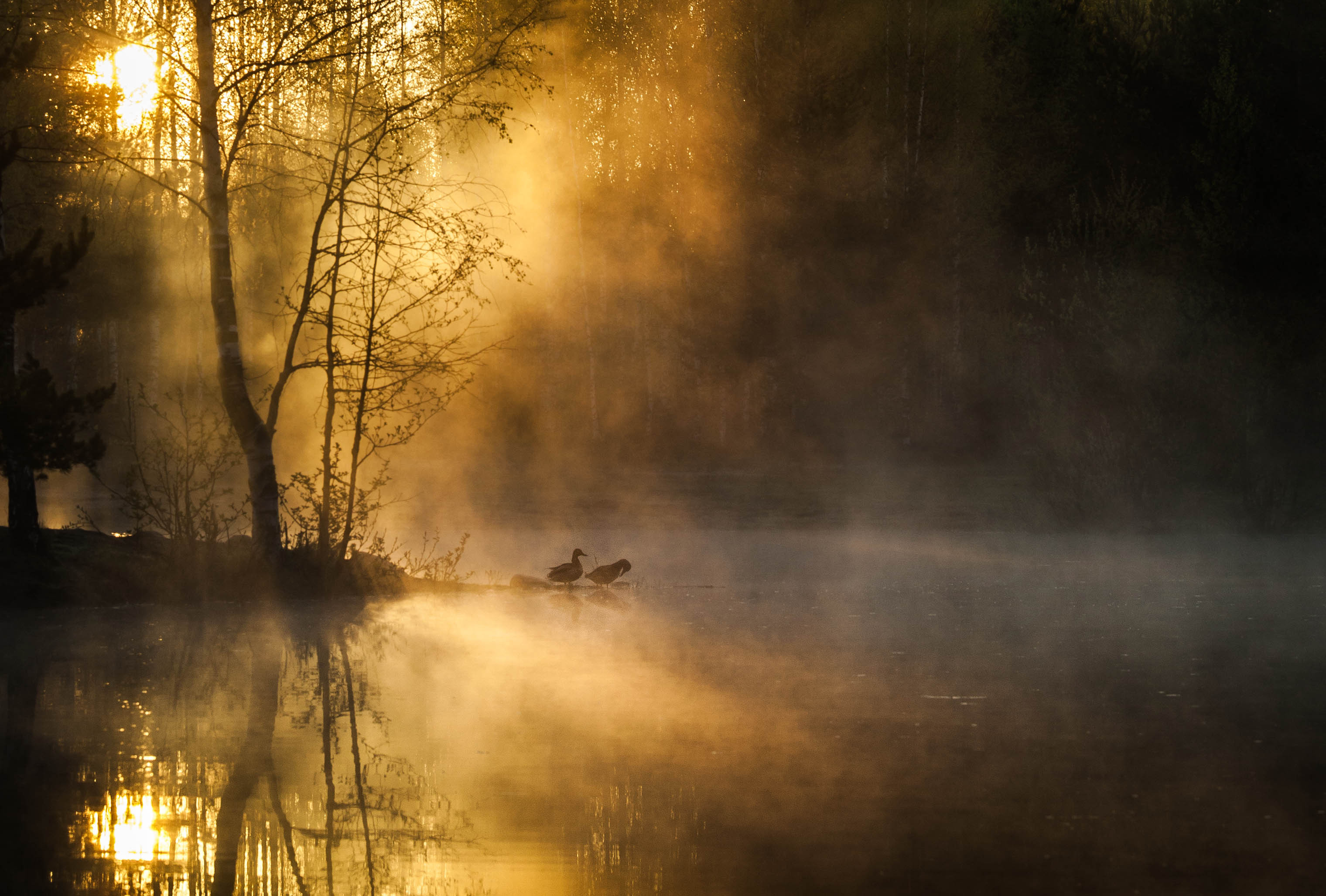 autumn fog wallpapers high quality download free