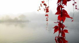 Autumn Fog Photo Free