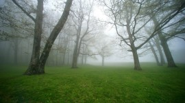 Autumn Fog Photo Free#1