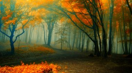 Autumn Fog Wallpaper Download