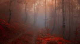 Autumn Fog Wallpaper For Desktop