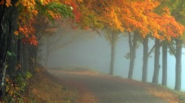 Autumn Fog Wallpaper Full HD#1