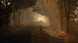 Autumn Fog Wallpaper Gallery