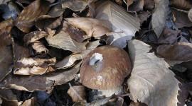 Autumn Mushrooms Desktop Wallpaper