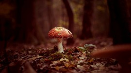 Autumn Mushrooms Photo Free