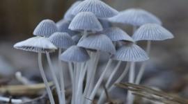 Autumn Mushrooms Wallpaper For Mobile