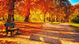 Autumn Park Best Wallpaper