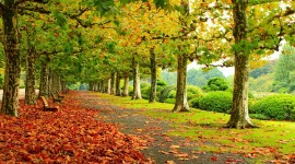 Autumn Park Photo Download