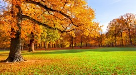 Autumn Park Wallpaper For PC