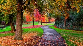 Autumn Park Wallpaper Free