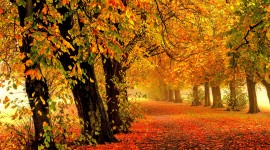 Autumn Park Wallpaper Full HD