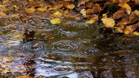 Autumn Rain wallpapers high quality