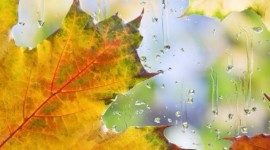 Autumn Rain Wallpaper For Android