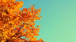 Autumn Sky Wallpaper For PC