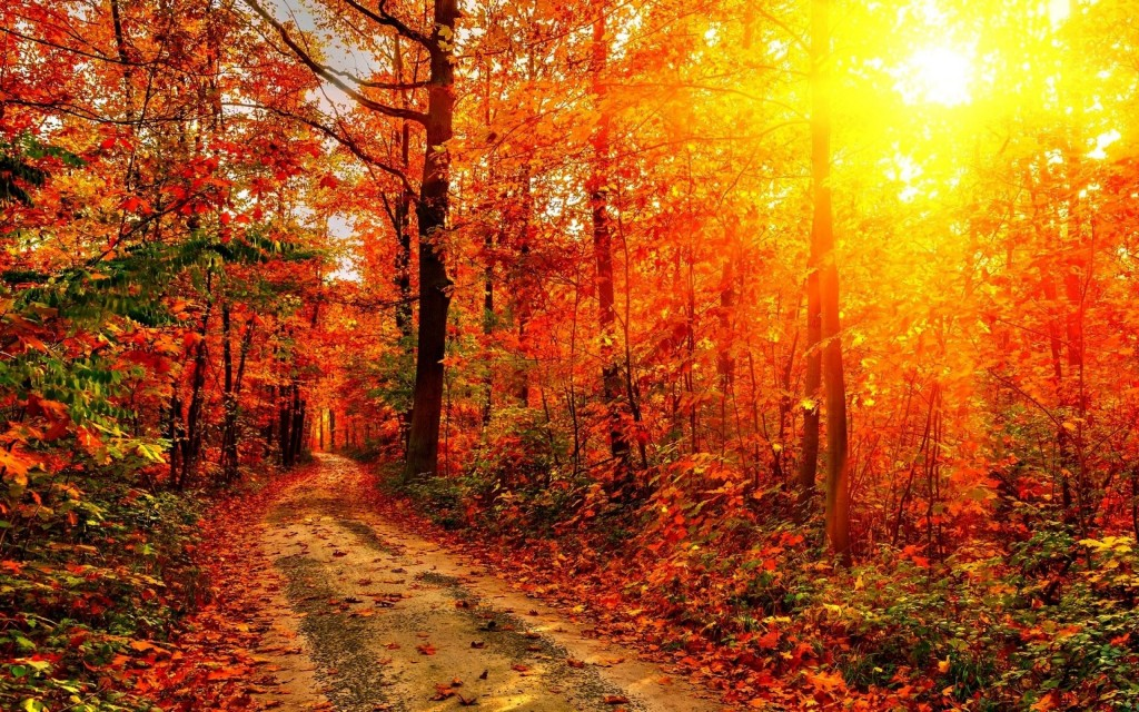 Autumn Sun Wallpapers High Quality Download Free