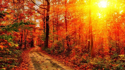 Autumn Sun wallpapers high quality
