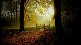 Autumn Sun Desktop Wallpaper