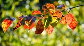 Autumn Sun Desktop Wallpaper HD