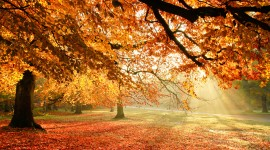 Autumn Sun Photo