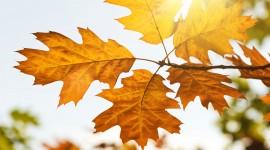 Autumn Sun Photo Download