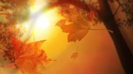 Autumn Sun Photo Free
