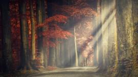 Autumn Sun Wallpaper 1080p
