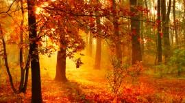 Autumn Sun Wallpaper