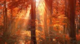 Autumn Sun Wallpaper For Desktop
