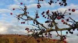 Autumn Sun Wallpaper For IPhone