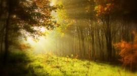 Autumn Sun Wallpaper For PC