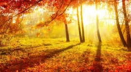 Autumn Sun Wallpaper Full HD