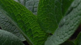 Comfrey Wallpaper Gallery