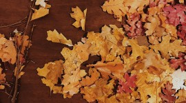 Diy Autumn Leaf Garland Wallpaper  IPhone#1