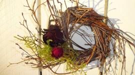 Dried Twigs Photo
