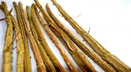 Dried Twigs Photo Free