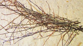 Dried Twigs Wallpaper Download