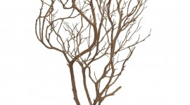 Dried Twigs Wallpaper For IPhone#1