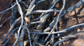 Dried Twigs Wallpaper Free