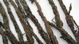 Dried Twigs Wallpaper Full HD