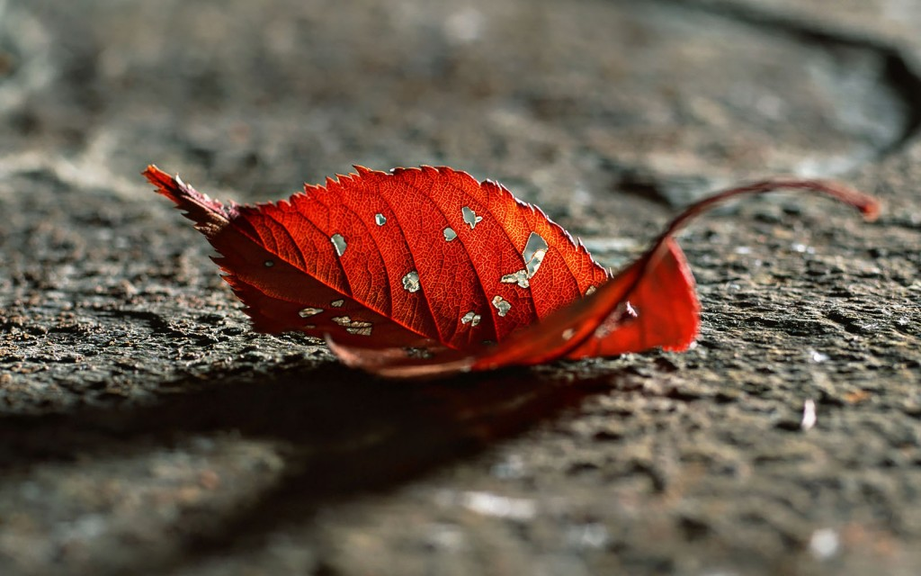 Dry Leaves wallpapers HD