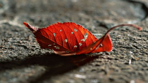 Dry Leaves wallpapers high quality