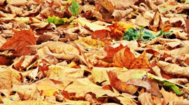Dry Leaves Desktop Wallpaper For PC