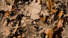 Dry Leaves Photo Download